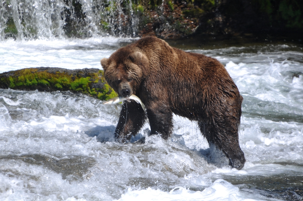 Wildlife Viewing While Camping and RV-ing in the Yukon